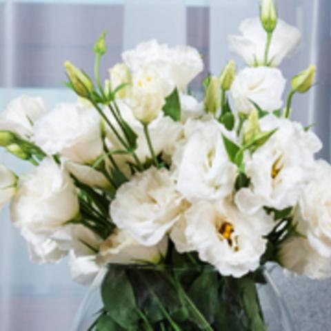 お花のお手入れ方法サムネイル