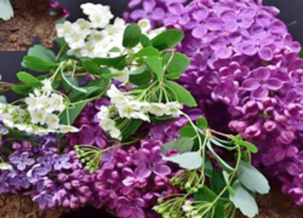 花とグリーンが心を癒す理由サムネイル